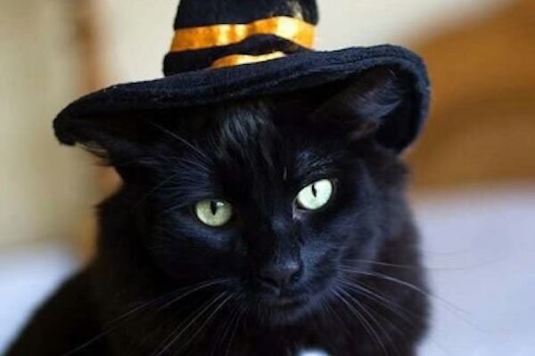 black cat dressed in witch hat
